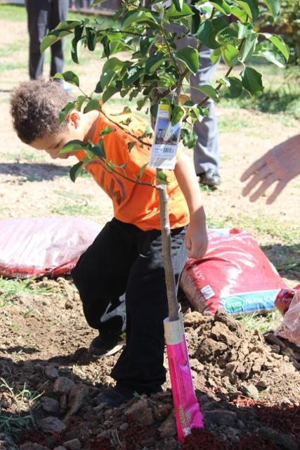 Planting of the School Tree (427x640)